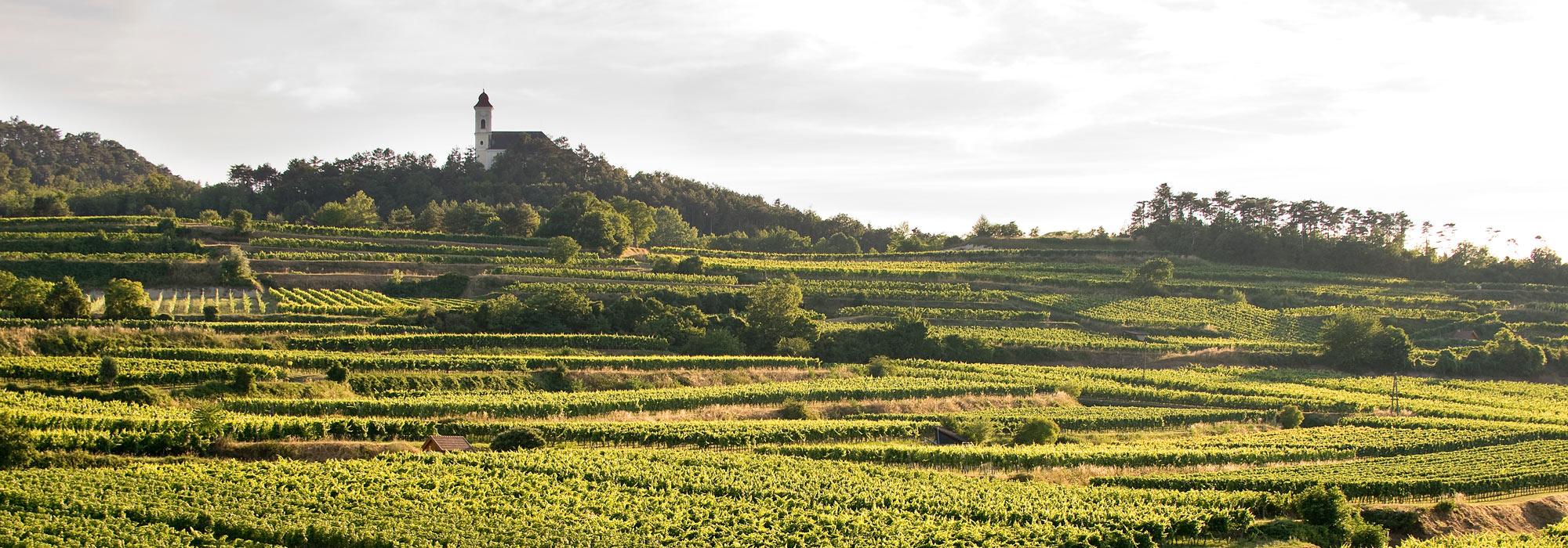 Weingärten von Forstreiter