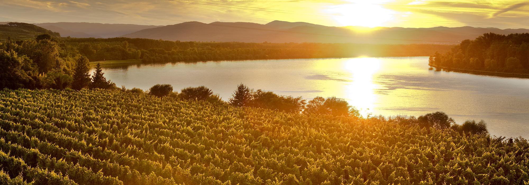 Sonnenuntergang über den Weingärten an der Donau