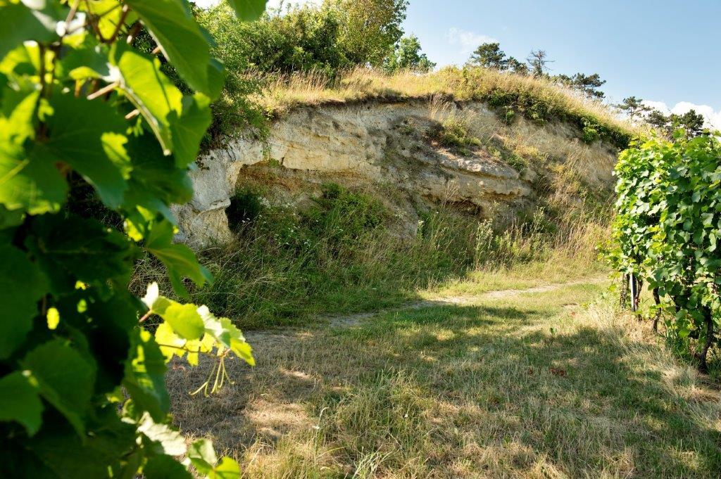 Weingut Forstreiter Bodenbeschaffenheit Weingarten
