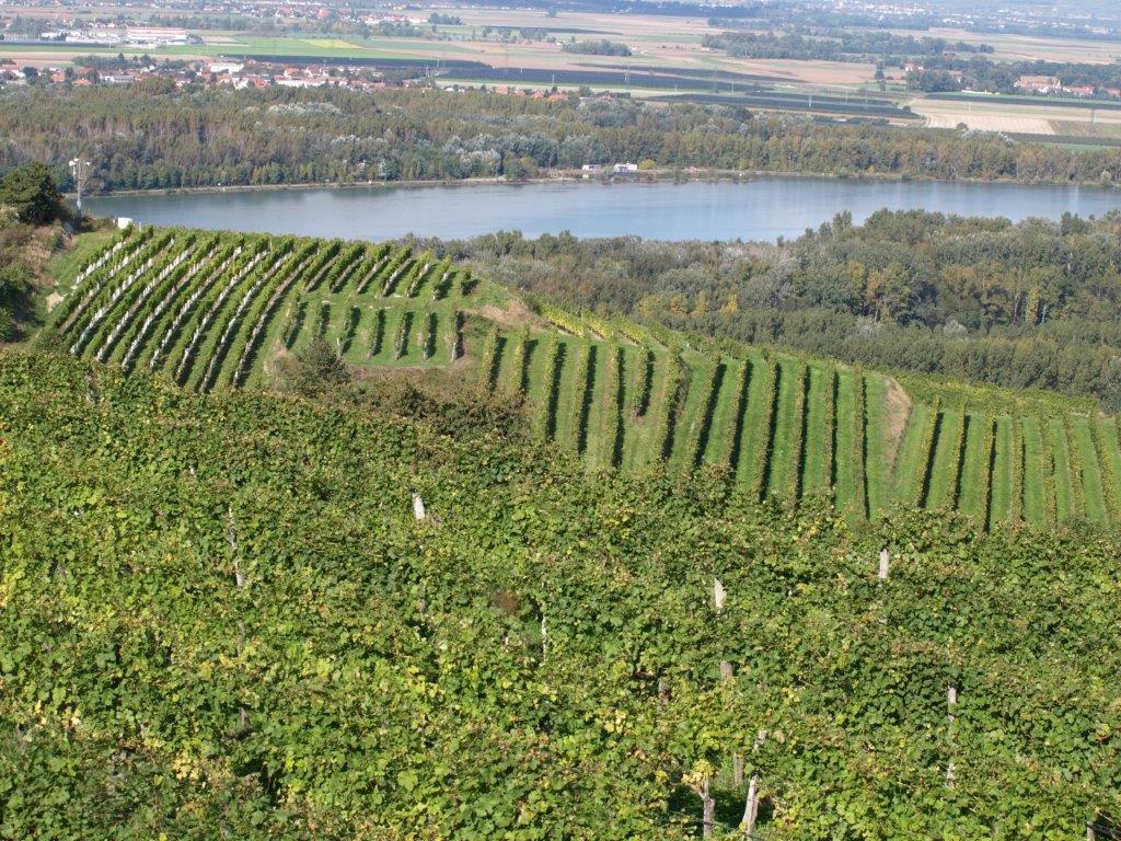 Weingut Forstreiter Riede Schiefer mit Blick auf Weingarten Grüner Veltliner