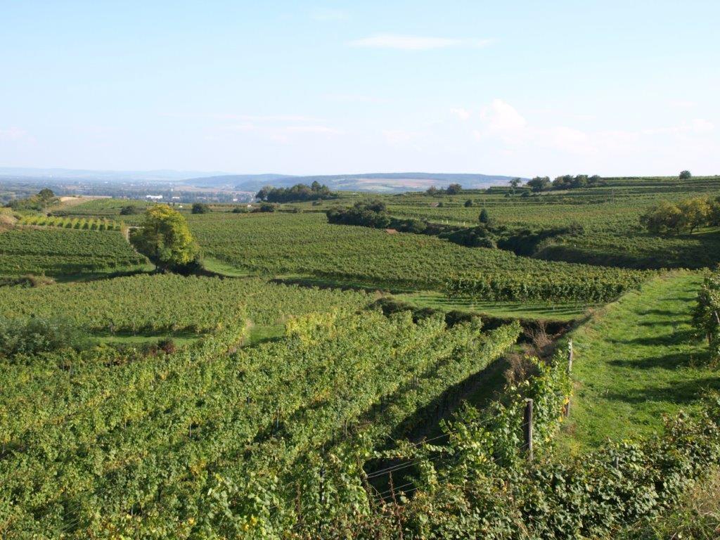 Weingut Forstreiter Blick auf Ried Kogl