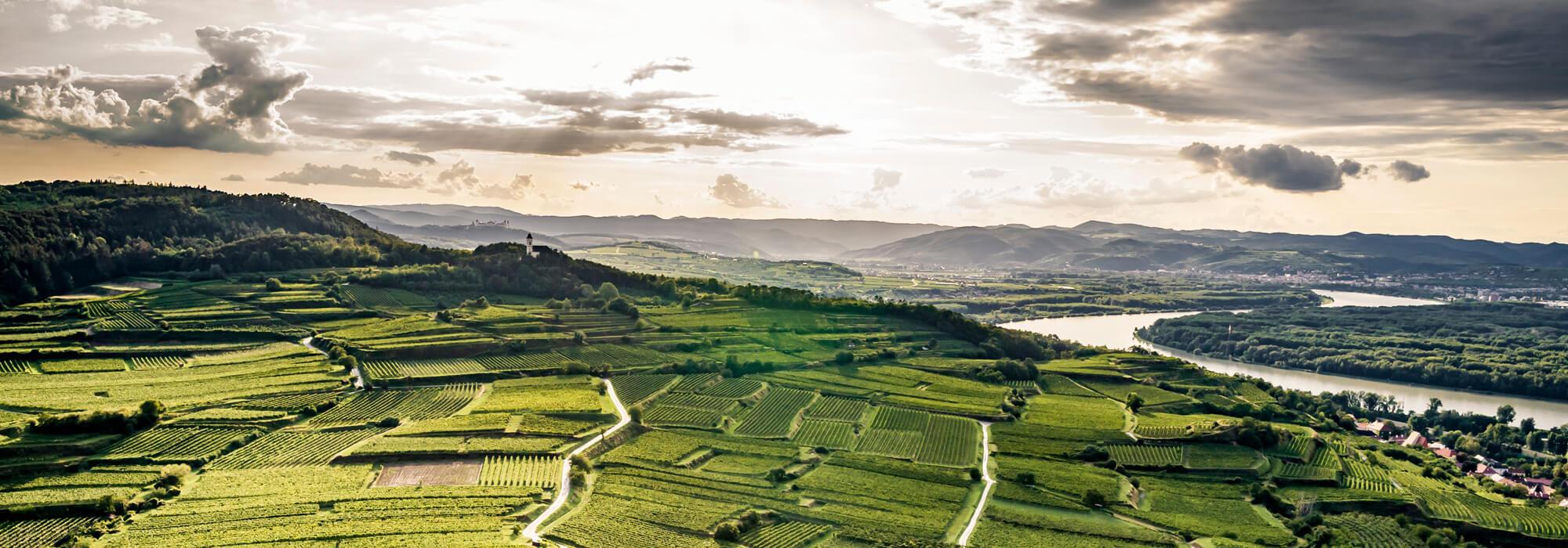 Luftbild von den Weingärten